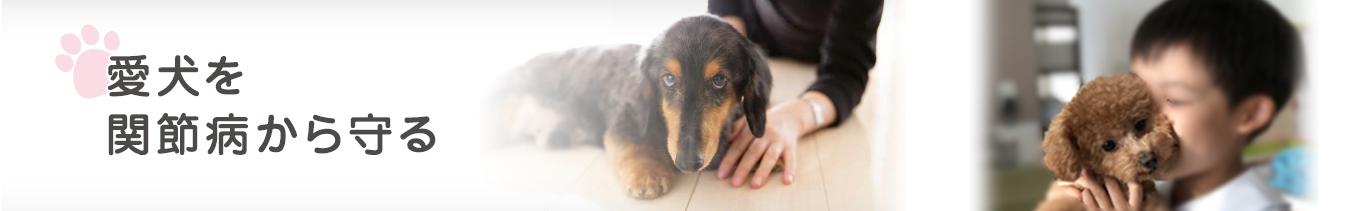 愛犬を関節病から守るのページ